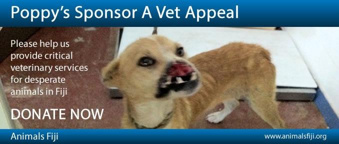 Poppy's Sponsor A Vet Appeal - Fiji Appeal