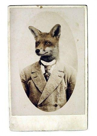 Fox Print, Young Mr. Fox, 8x12 Inch Print ($28.00) - Svpply