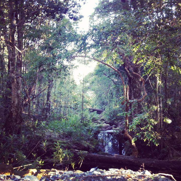 Tzitzikama Forest, Knysna, South Africa