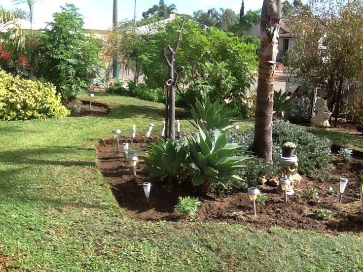 Part of my front garden