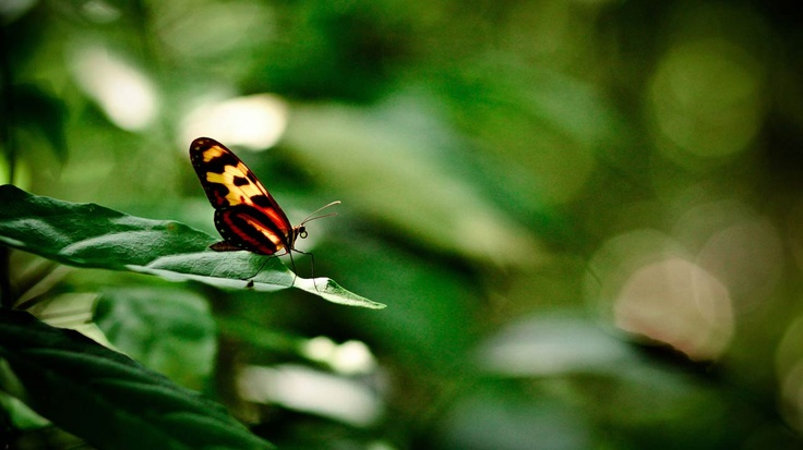 Bella Mariposa del Río Pance, Cali, Colombia! JAIRO GUTIERREZ PHOTOGRAPHER • COLOMBIA