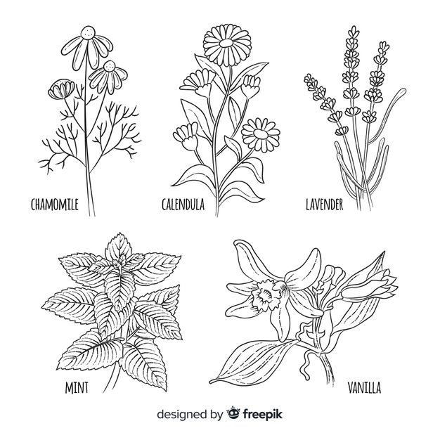 Download Spices And Herbs Collection For Free Wildblumen Blumen