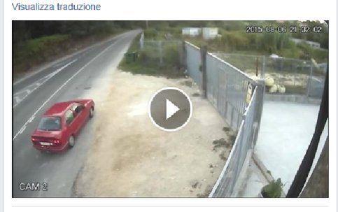 """Abbandonano cane dopo averlo """"lanciato"""" in un cortile/VIDEO"""