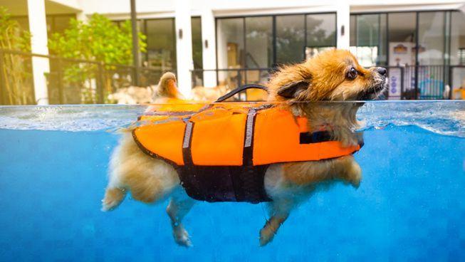 How to train a dog to swim