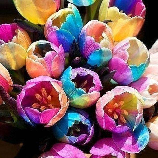 Rainbow Tulip Seeds,Potted Tulip Flower Seeds,Flower Seeds of Rare Species
