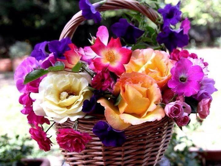 150 Best Flowers Images on Pinterest Pretty Flowers Exotic