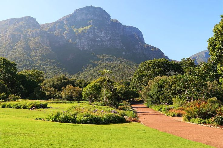 Things to do in Cape Town - Kirstenbosch National Botanical Gardens