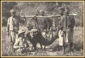 September 27, 1937: Last Balinese Tiger Killed. It was the first subspecies of tiger to be wiped out by man, but it wouldn't be the last. No photographs or films of live Balinese Tigers exist -- only pictures of dead ones, like this result of a tiger hunt in 1913.