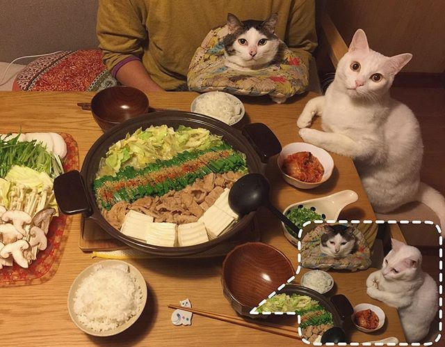 鍋だよ〜 ♨︎ #とり野菜みそ で、とりじゃなくて味噌もつ鍋❤︎ ニンニクも効かせて♩ シメにラーメンにしようと思ったけど、白ご飯に合いすぎる味やしラーメンは明日入れる事にして今日は白ご飯おかわり♩おかわり〜♩ 帰ったら、お父はんが何でか?洗い物してくれててラツキー☆ #八おこめ #ねこ部 #cat #ねこ #八おこめ食べ物 #もつ鍋 #味噌もつ鍋