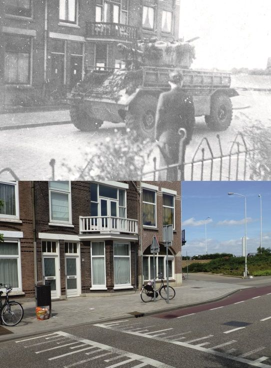 Engelse Staghound op verkenning (Willemsweg)