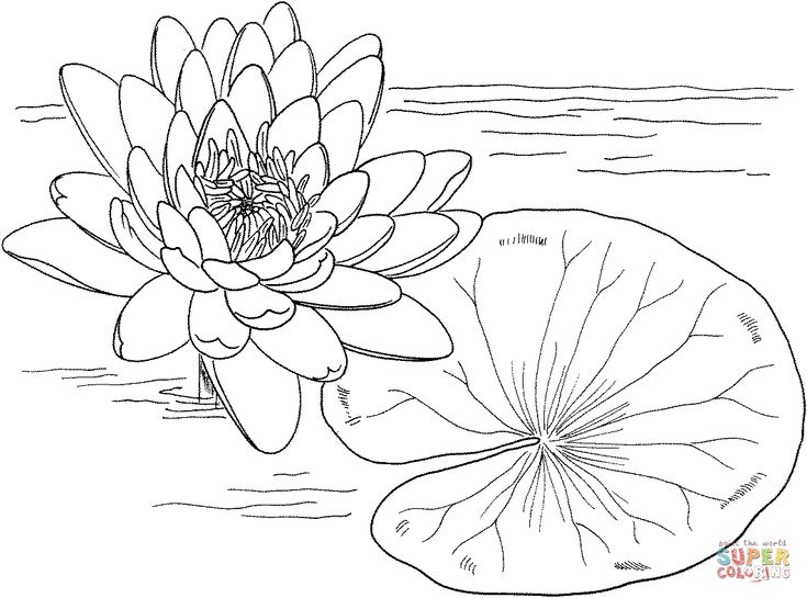 56978-monet-water-lilies-coloring-page.gif (1061×787 ...