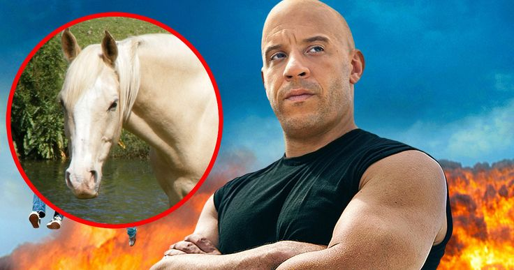 'Fast & Furious 8' Prop Kills Horse in Bizarre Accident -- A local horse in Iceland was killed near the set of 'Fast & Furious 8', when a prop was sent flying due to gale force winds. -- http://movieweb.com/fast-furious-8-set-horse-killed-accident/