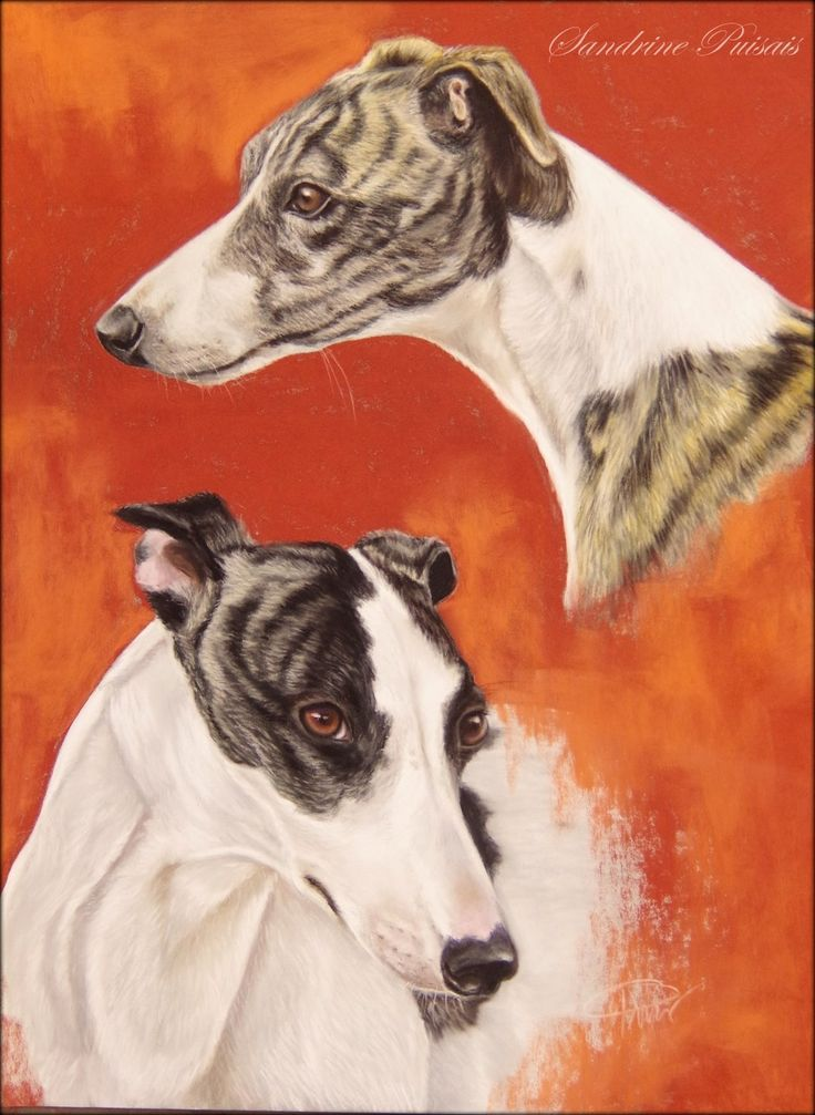 whippets  pastel sec