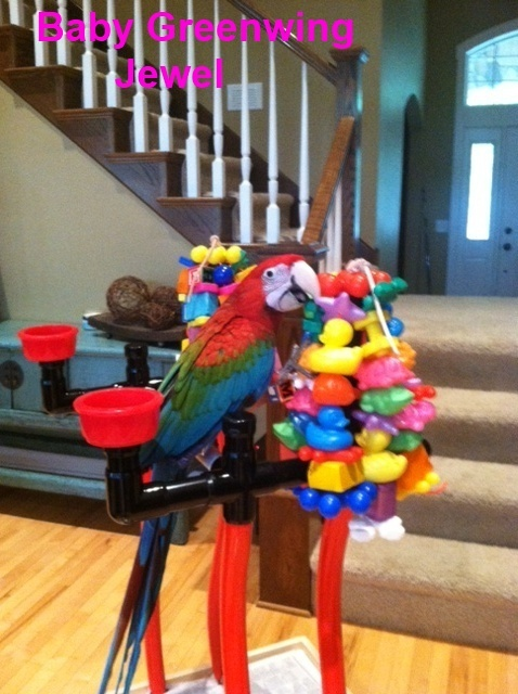 PVC Bird Stand for Cockatoos and Macaw Size Birds
