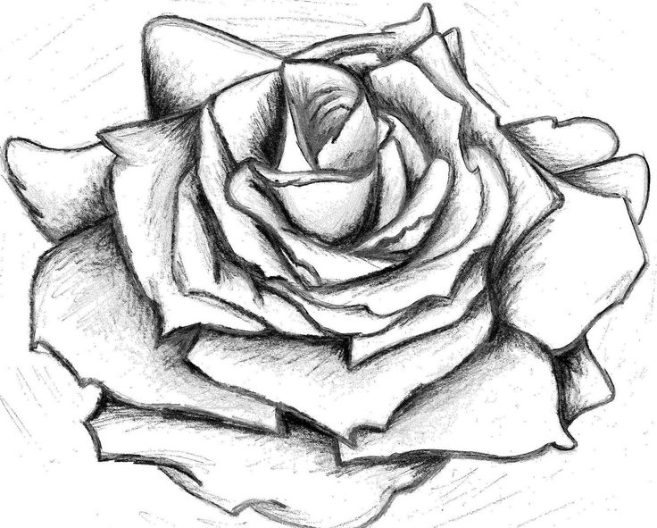 Best HD Rose Drawing http://www.viewwallpaper.com/best-hd ...