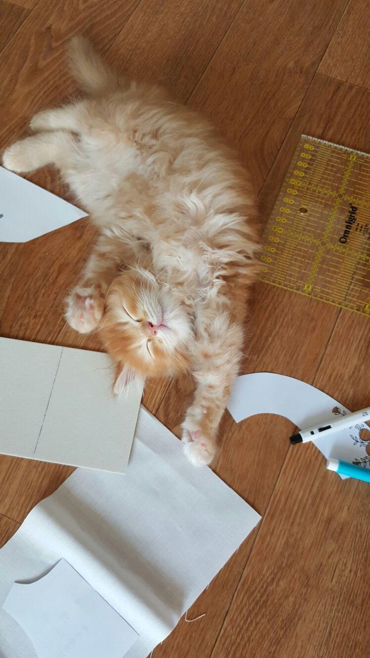 #페르시안 #고양이 #아기고양이
