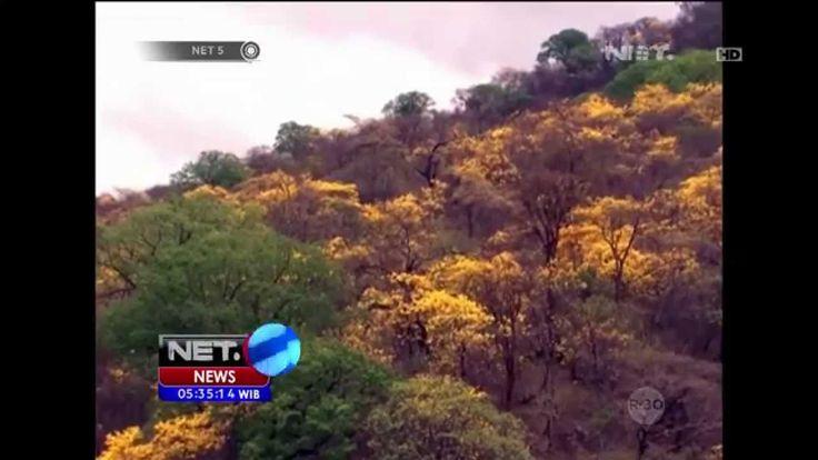 Pesona Bunga Guayakan di Ekuador