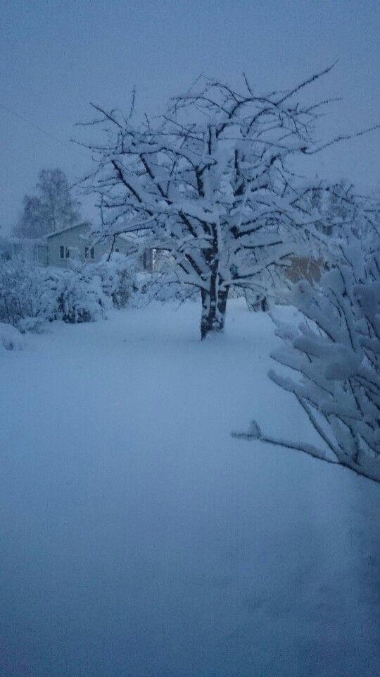 Den første sne