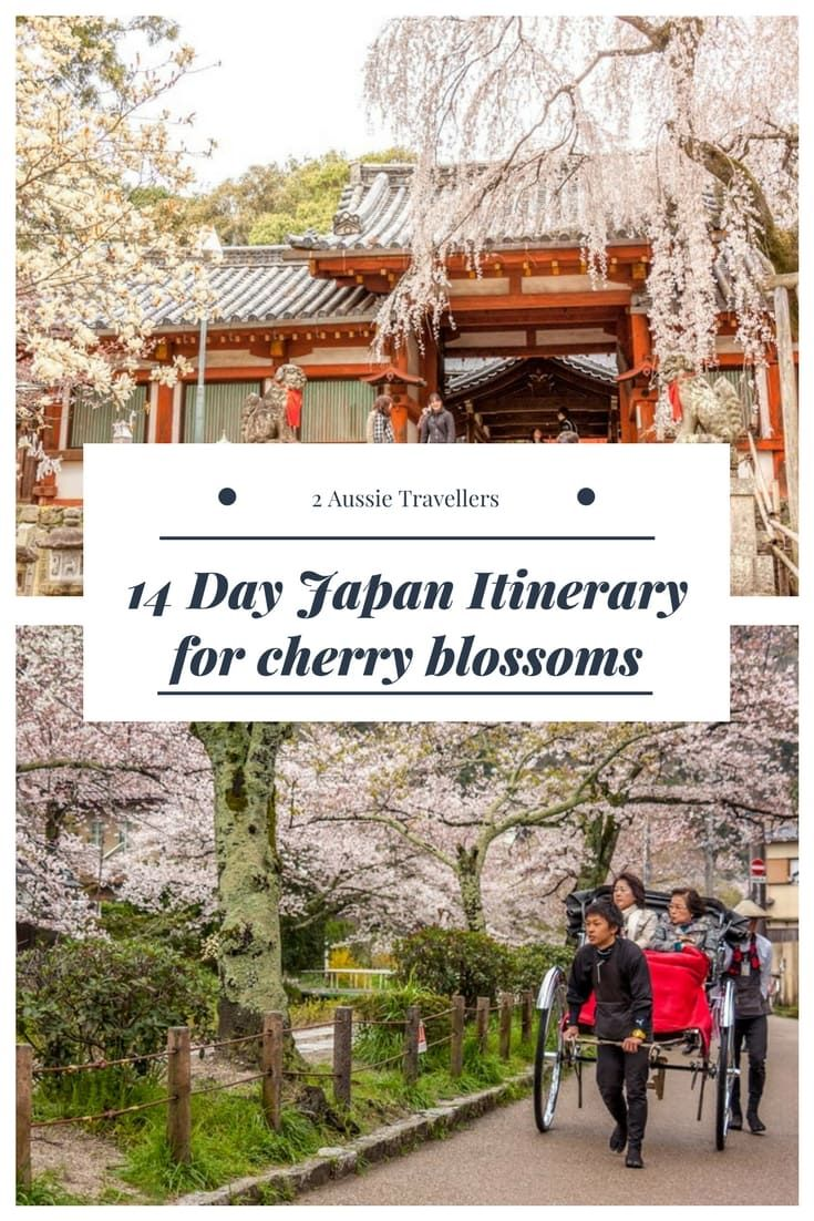 14 day Japan itinerary for cherry blossoms #Japan #cherryblossoms #sakura
