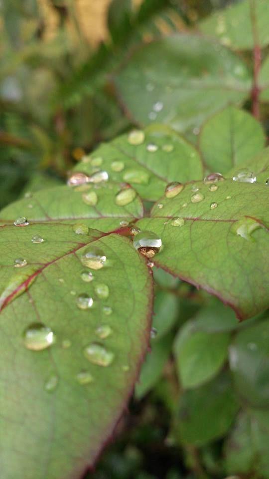 Nature Photography shot