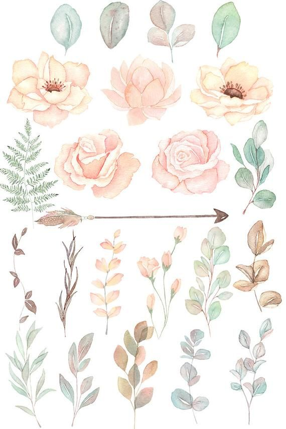 Blush Watercolor Floral Clipart Watercolor Eucalyptus Clipart