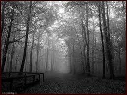 Znalezione obrazy dla zapytania fotografia czarno biała