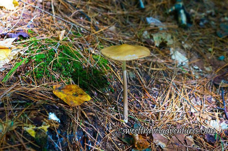 Mushroom Growing in Haliburton Forest in Haliburton Highlands, Ontario