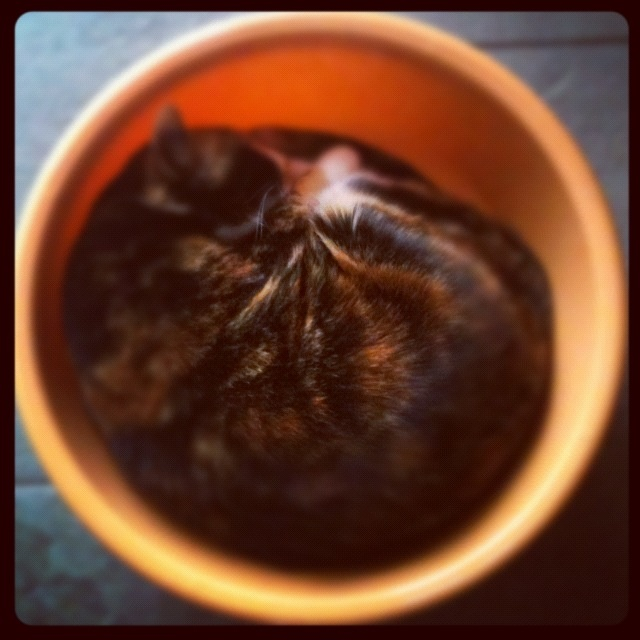 Cat in catino