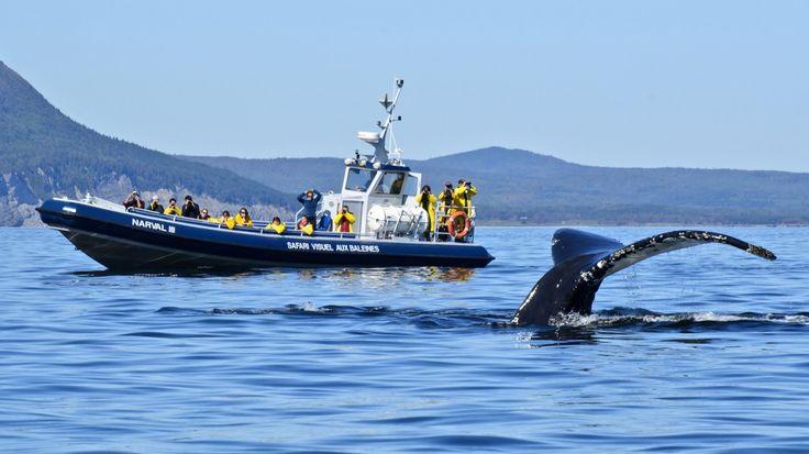 Croisières aux baleines.