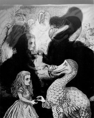 Dodo Bird, Abelardo Morell, 1998.