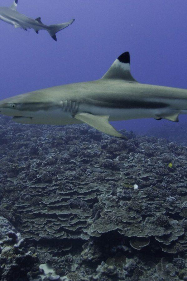 Une Adolescente Tuee Par Un Requin A La Reunion Requin La Reunion Adolescente