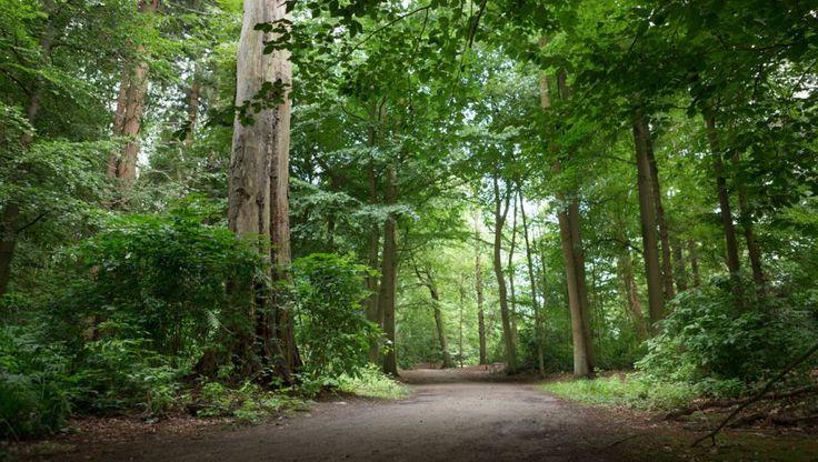 Fietsen door het bos is erg afwisselend en mooi. Ook als het warm is kunt u hier verkoeling op zoeken, want u fietst grotendeels door de schaduw en heeft geen last van het warme asfalt. Daarom hebben wij voor u vijf mooie routes door het bos op een rij gezet.