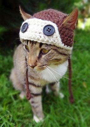 Winter Fashion Statements: Cats in Unlikely Hats.