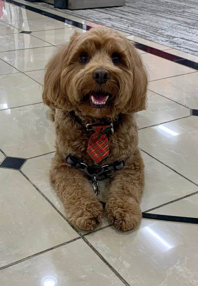 Professional Canine Training And Behavior Modification In Dallas Texas Canine Solutions Dallas Service Dog Training Canine Dog Trainer