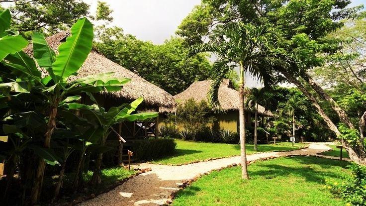 La végétation tropicale entre les villas