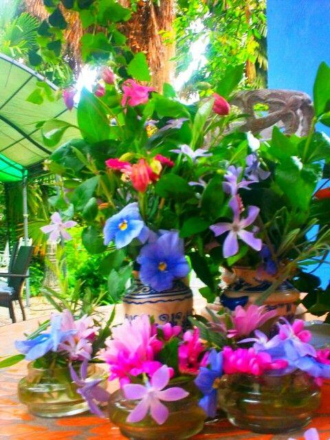 Flores | Flores