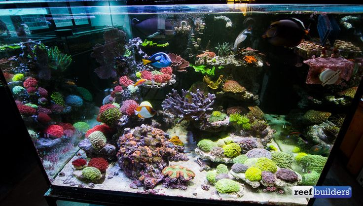 Aqua sd san diego reef aquarium store saltwater aquarium for Fish store san francisco