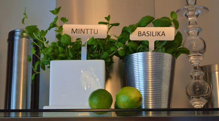 Minttua & basilikaa rosterikyltein