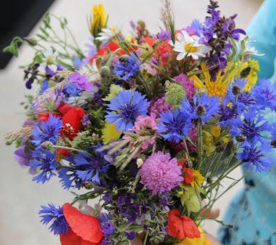 markblomster juni | marits provence: Sommerblomster i fjellet