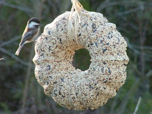 Bird Seed Wreath made in Bundt Pan, Making as Christmas gifts