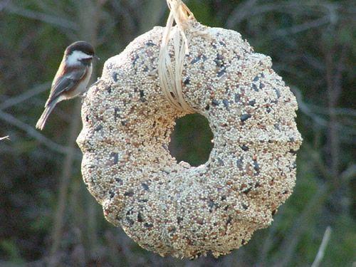 25 Best Ideas About Homemade Bird Feeders On Pinterest