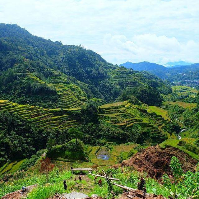 Those views of the Bananue Rice Terraces though 😍 . . . . #Philippines #Banaue #RiceTerraces #BBCtravel #InstaTravel #Travel #TravelBlog #NatGeoTravelPic #TLpics #LiveTravelChannel #Wanderlust #CNtraveler #PassionPassport #TravelGram #LonelyPlanet #ILoveTravel #TopDecker #Moretoexplore #MyFavTourlina #GuardianTravelSnaps #WeLiveToExplore #ForbesTravelGuide #HuffPostTravel #TBScommunity #InstaDaily #PhotoOfTheDay #InstagramHub #IGdaily #MyLifeTrip