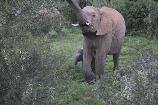Baby elephants is today's #virtualvacay