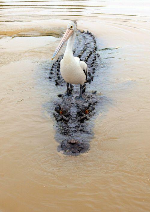 river crossing (by Franco Mottironi)