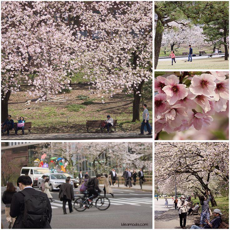 Tokoy- cherry blossom ♥ #cherryblooming #cherryblossom #tokyo #cherrytrees #cherry