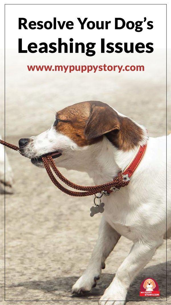 Resolve Your Dog S Leashing Issues Aggressive Dog Dog Training