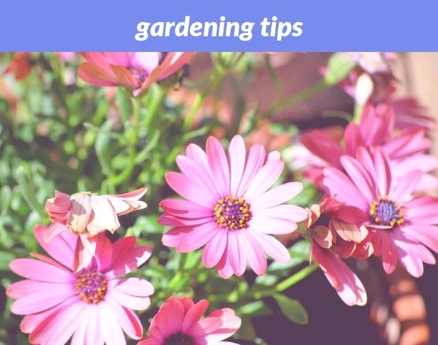 Gardening Tips 14 20180915174753 53 New England Gardening Zones