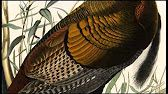 (49) Hokusai: The End of an Era - YouTube