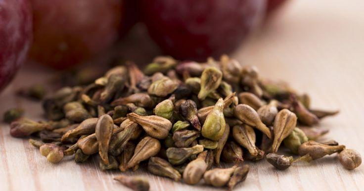 Научно доказано, что эти семена лучше химиотерапии!