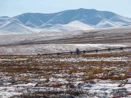 Investigacion La tundra